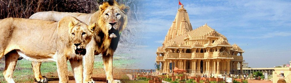 Riviera Tours And Travel Ahmedabad